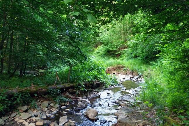 Dolina potoku w pasmie Lopiennika. Bieszczady z jaktoblisko.com