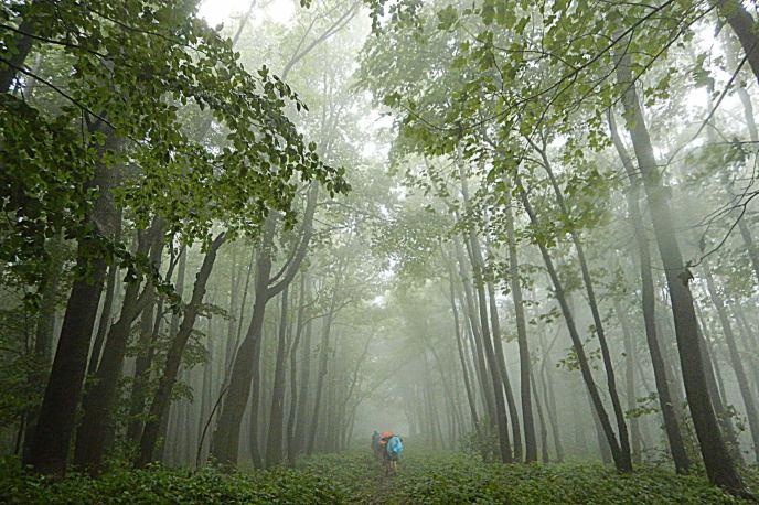 Lopiennik i gesta mgla. Bieszczady z jaktoblisko.com
