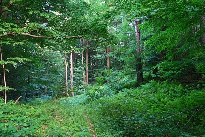 Zarosniete, lesne sciezki Lopiennika. Bieszczady z jaktoblisko.com