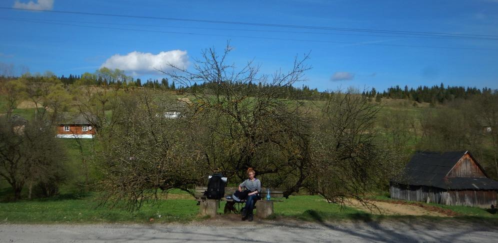W Boryni pod sklepem - stara jabłoń